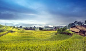 烏云下的農田和茅屋攝影圖片