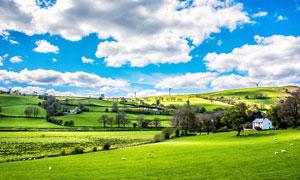 蓝天白云下的绿色草原摄影图片