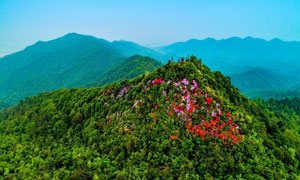山顶美丽的山林和花朵摄影图片