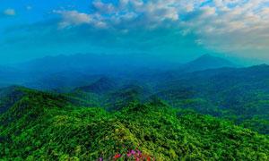 美丽的青山树林景观摄影图片