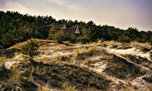 天空白云树丛自然风景摄影高清图片