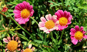 花期绽放与枯萎的花朵摄影 澳门线上必赢赌场