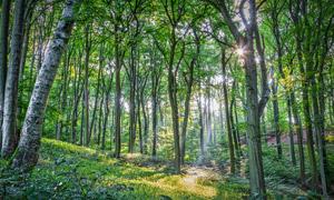 风和日丽天气树林风光摄影高清图片