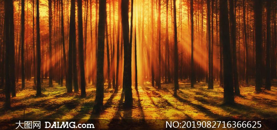 黄昏暖阳照耀下的树林摄影高清图片