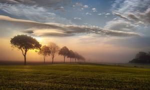 农田树木白云自然风景摄影高清图片