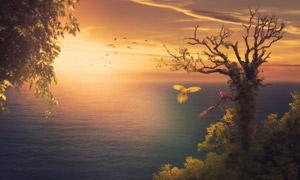 海边大树上的两只鹦鹉摄影高清图片