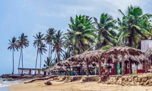 海边沙滩和椰树林高清摄影图片