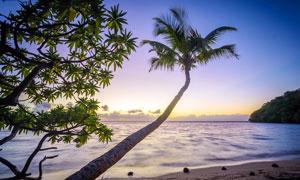 黃昏下的海邊椰樹和沙灘攝影圖片