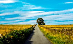 蓝天下的田园道路景观摄影图片