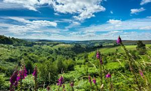 美丽的青山和野花摄影图片