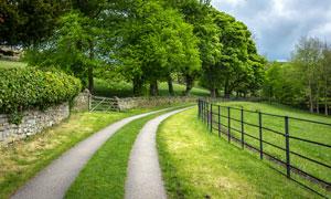 公园中的绿荫小路摄影图片