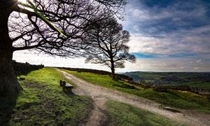 田园大树下的小路高清摄影图片