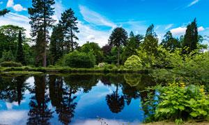 林中美丽的湖泊景色摄影图片