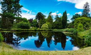 蓝天白云下的林中湖畔摄影图片