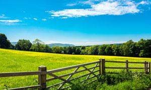 蓝天下的草地和黄色野花摄影图片