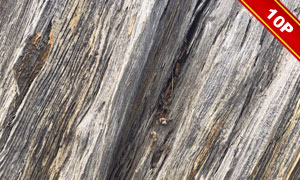 不同材質的樹皮背景主題高清圖片V1