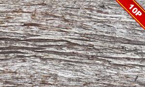 不同材质的树皮背景主题高清图片V2