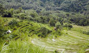 山坡美丽的水稻梯田高清摄影图片