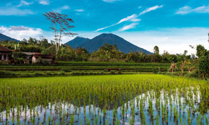 美麗的鄉村和稻田攝影圖片