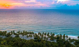 傍晚海边沙滩上的椰树摄影图片