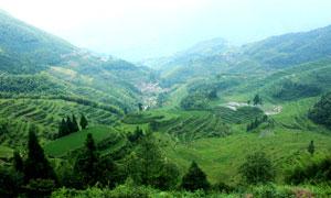 大山之中美麗的梯田攝影圖片