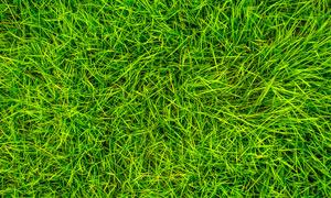 綠色草叢和草地背景攝影圖片