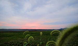 黄昏下的田园风光摄影图片