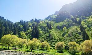 蓝天下的青山和树林美景摄影图片