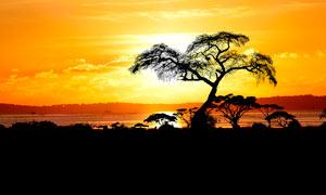 夕阳下河边大树剪影摄影图片