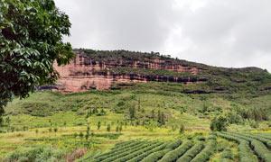 山坡種植的農作物高清攝影圖片