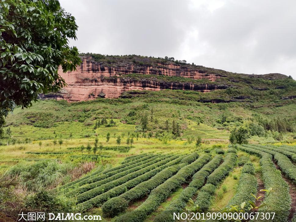 山坡种植的农作物高清摄影图片