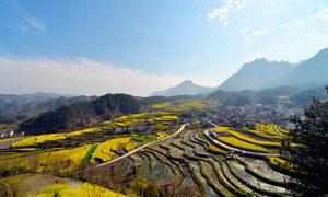 陽光下的山坡梯田美景攝影圖片
