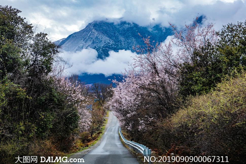 山中小道美景高清摄影图片