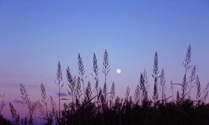 夜幕下的植物剪影高清摄影图片