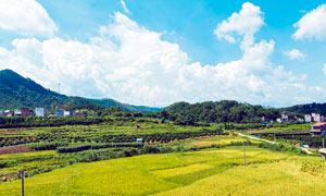 農村和田園農作物美景攝影圖片