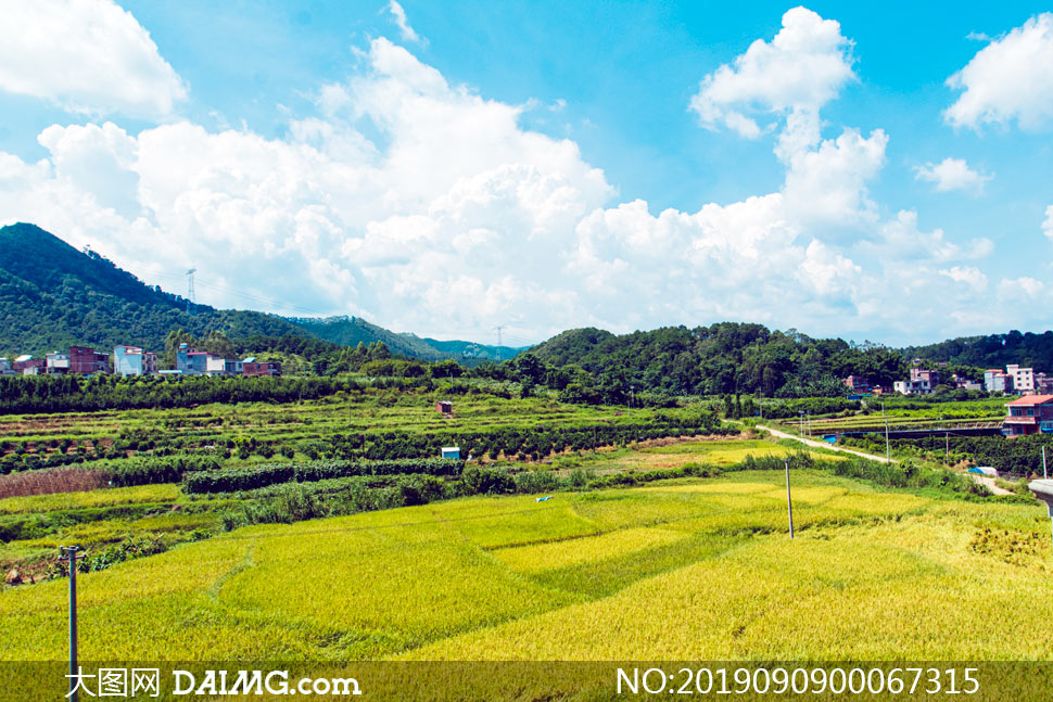农村和田园农作物美景摄影图片