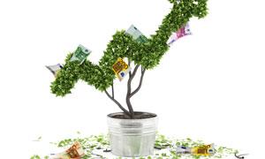 盆栽植物金融主题创意设计 澳门线上必赢赌场
