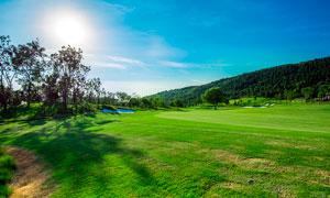晴空下的绿色草地高清摄影图片