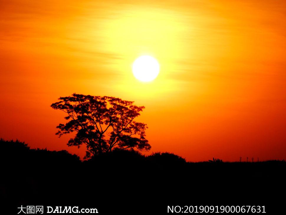黄昏下的树木剪影高清摄影图片