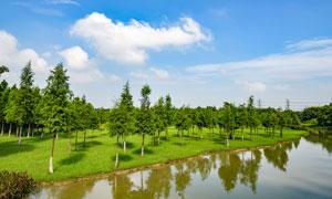 广东茶山生态园美景摄影图片