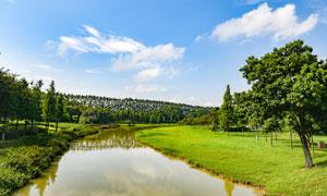 蓝天下的茶山镇生态园美景摄影图片