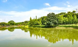 茶山镇湿地公园美景摄影图片