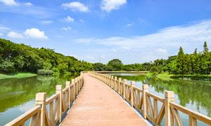 茶山生态公园中的木桥摄影图片