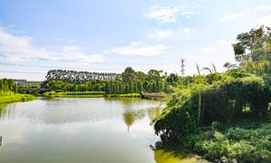 茶山镇湿地公园美景高清摄影图片
