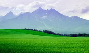 大山腳下的美麗農田攝影圖片
