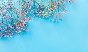 摆放好的满天星花朵高清摄影图片