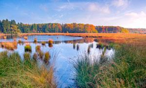 美丽的湿地公园高清摄影图片