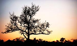 夕阳下的树木剪影高清摄影图片