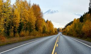 秋季森林中的公路高清摄影图片