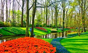 公园中的花朵和树林摄影图片